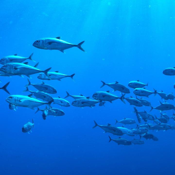 Regulované rybné hospodárstvo